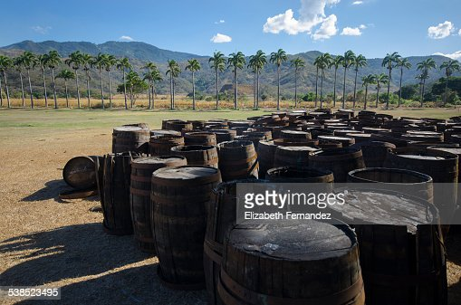 Abandoned old wooden rum barrels : Stock Photo