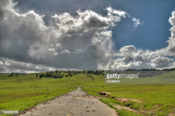 られた牛(HDR)Road