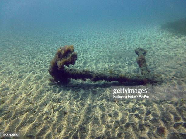 Abandoned Rusty Anchor Underwater