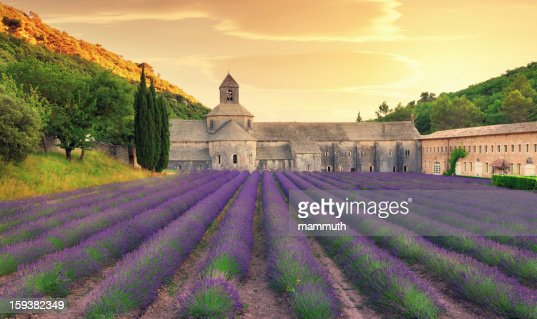 Abbey with blooming lavender field at dusk : Stock Photo