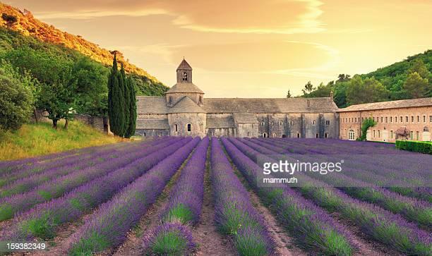 Abbey avec champ de lavande en fleurs au crépuscule