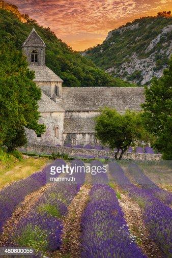 Abbey con fiorente-campo di lavanda al crepuscolo