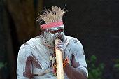 Portrait of a Yugambeh Aboriginal man play Aboriginal  music on didgeridoo, instrument during Aboriginal culture show in Queensland, Australia.