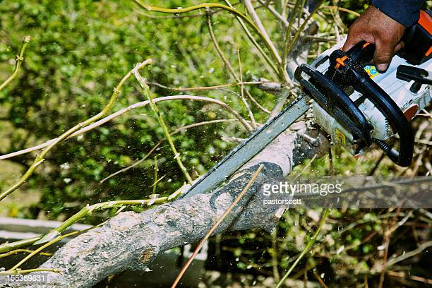 Aborist Using Chainsaw on Ash Tree Branch Sawdust Ylying