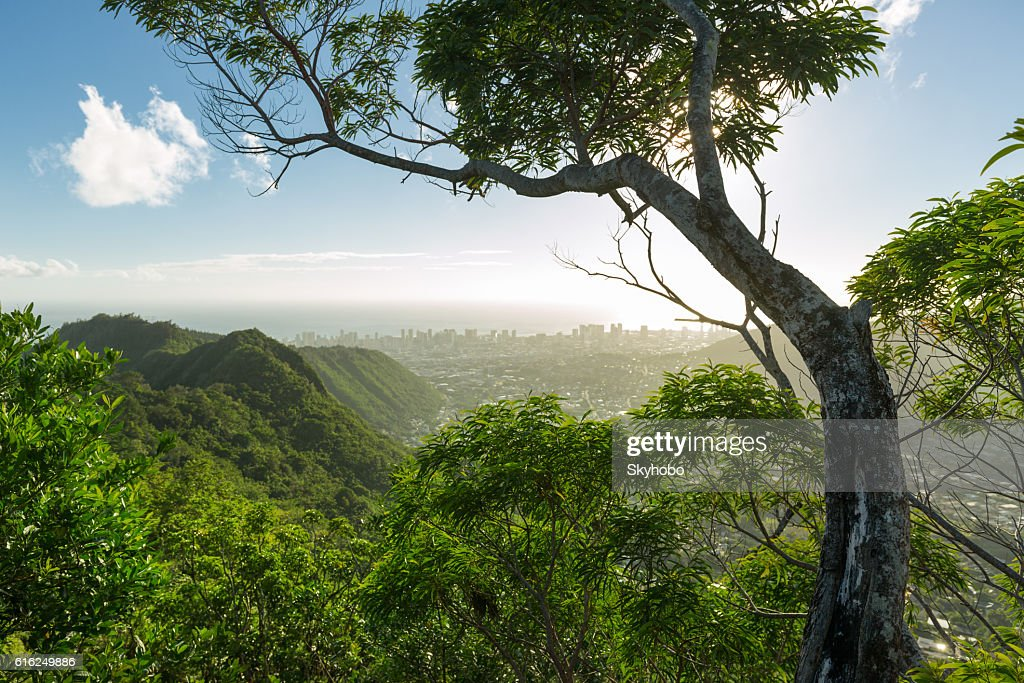 Above Honolulu on Wa'ahila Ridge : Stock Photo