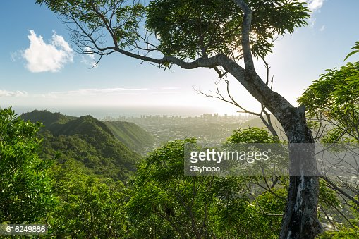 Above Honolulu on Wa'ahila Ridge : Foto stock