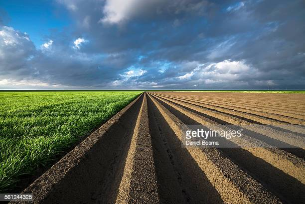 Abstract agricultural Dutch landscape