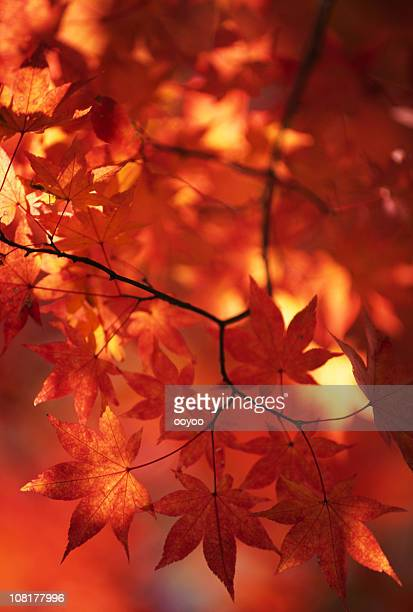 Abstrakt Herbst Blätter