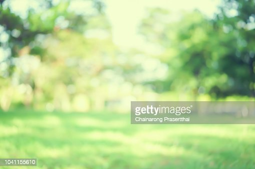 abstract blurred green color nature public park outdoor background at spring and summer season with sunlight effect and vintage color tone for design concept : Stock Photo