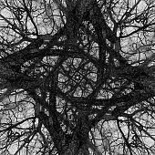 Overlaid tree branch composite image.