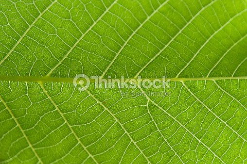 Abstract Closeup Green Leaf Texture Background Stock Foto