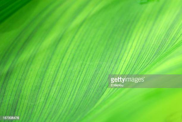 Abstract closeup of a leaf design