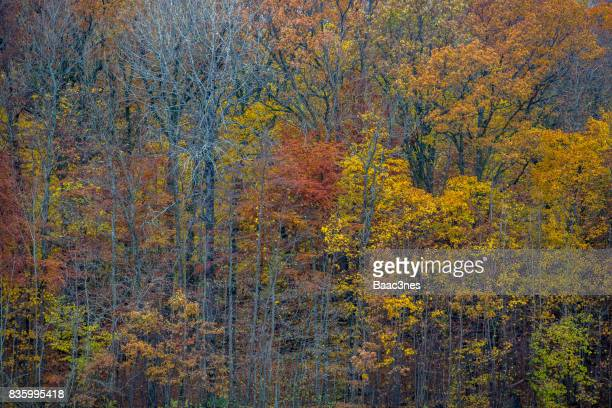 Abstract - Colorful trees with autumn colors