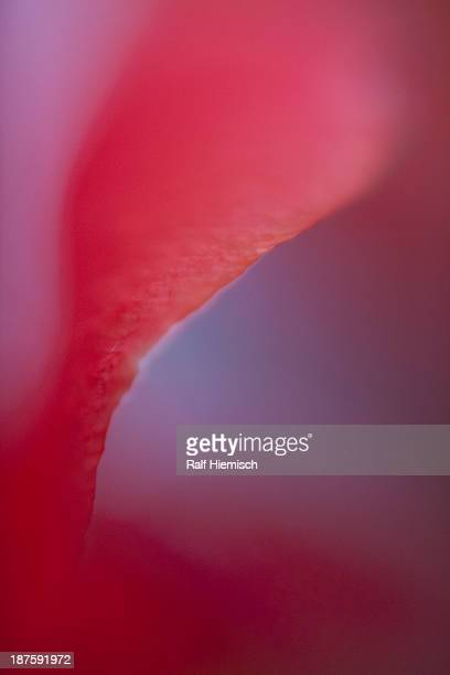 Abstract dreamy macro of a red flower petal