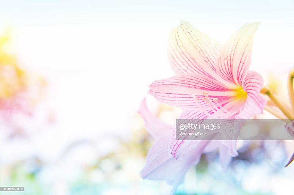 abstract flower background, flower Fresh color in morning : Stock Photo