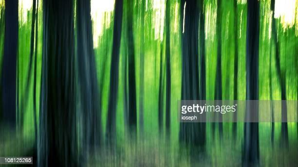 Abstrait forêt