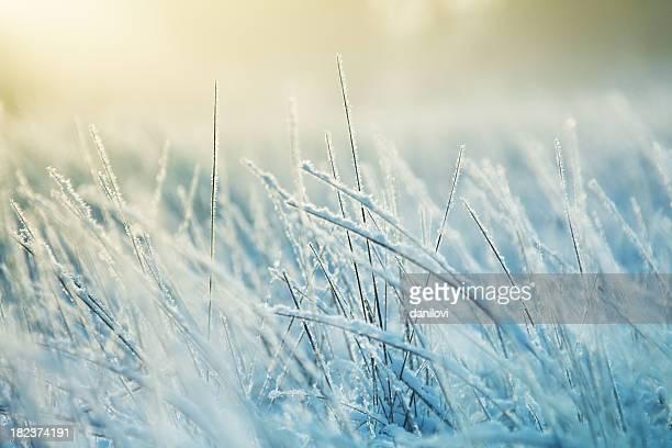 Abstract frozen grass
