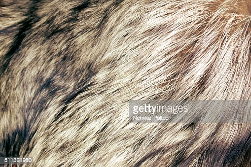 abstract fur background : Stock Photo