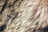 close up shot of abstract fur background