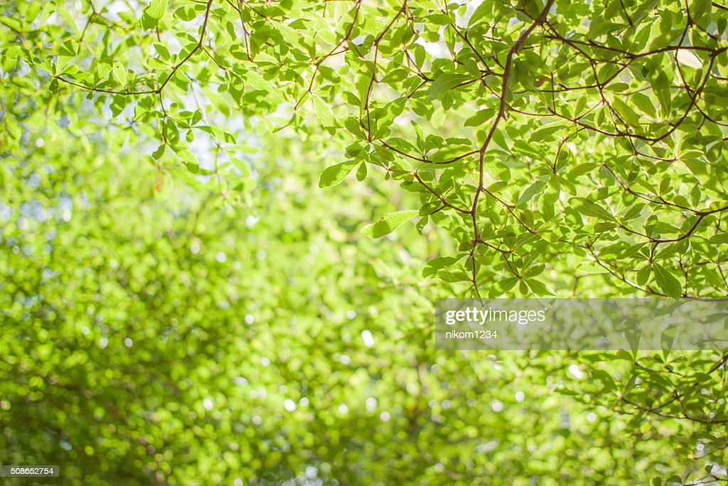 abstract green bokeh background : Stock Photo