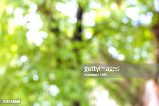 Abstract green nature background and texture : Stock Photo