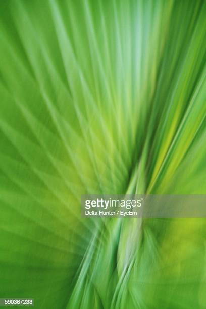 Abstract Image Of Leaf