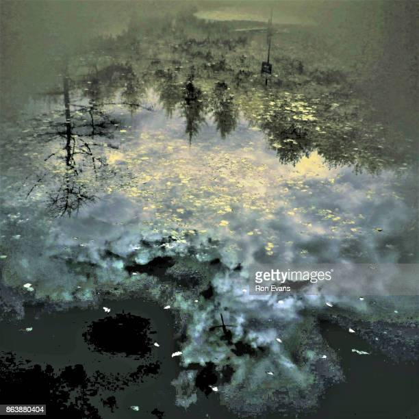 Abstract Impression of Water in the Woodland