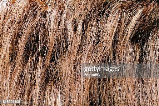 abstract long dry grass : Foto de stock