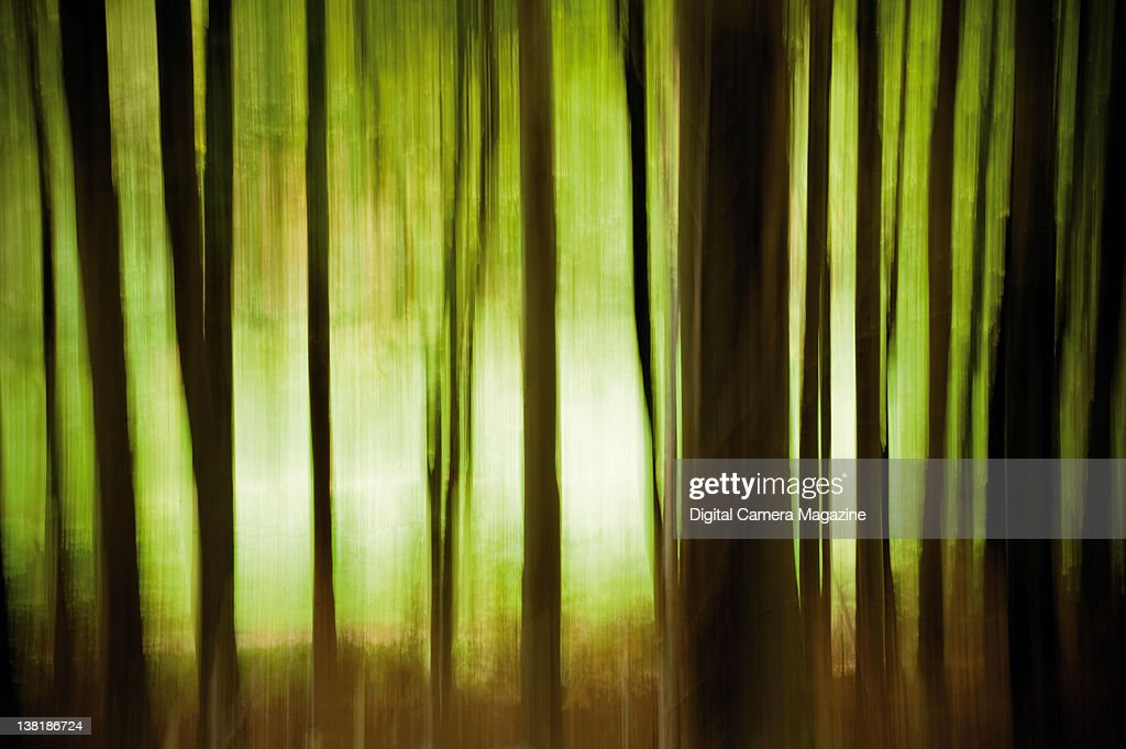 Abstract long exposure within a forest, taken on October 18, 2010.