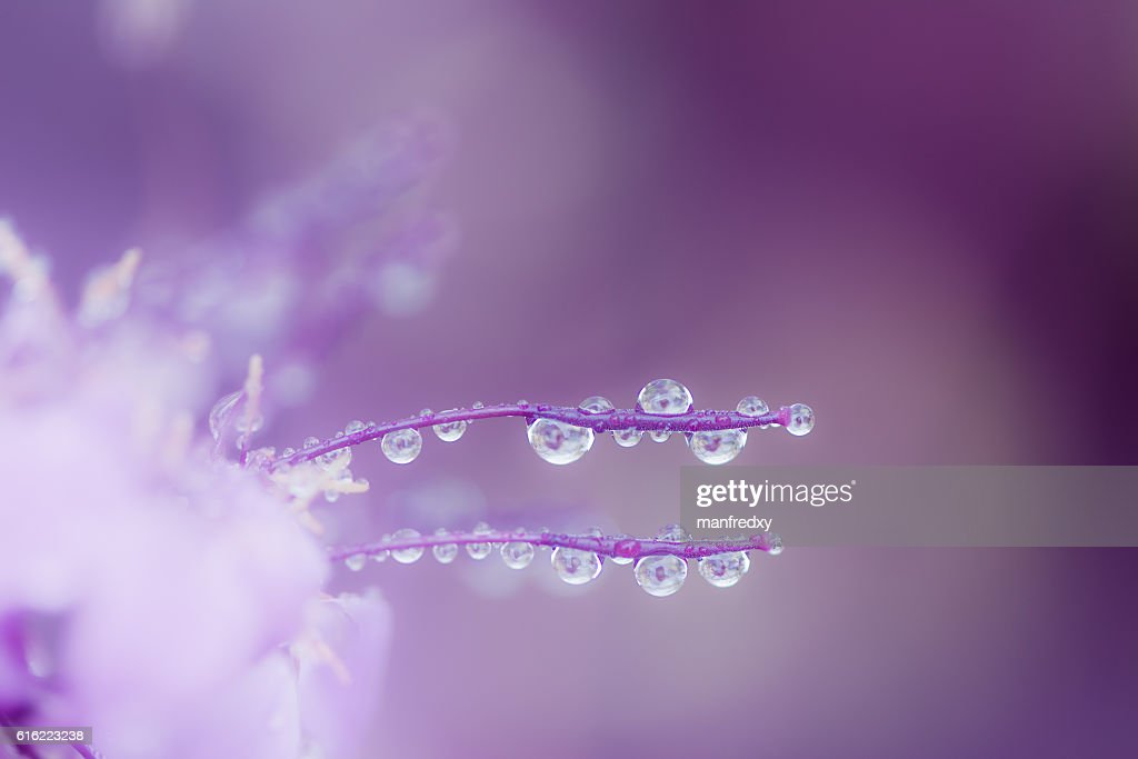 Abstract macro with rain drops on a flower blossom : Stockfoto