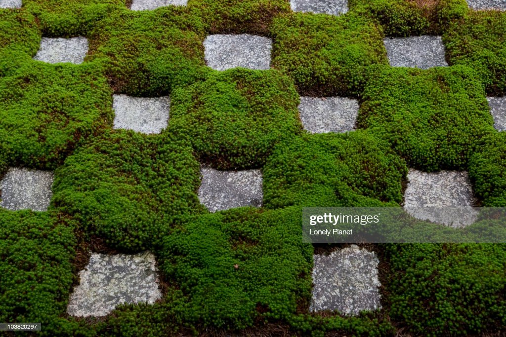 Abstract moss garden at Tofku-ji. : Stock Photo
