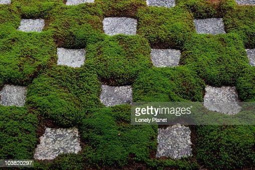 Abstract moss garden at Tofku-ji. : ストックフォト