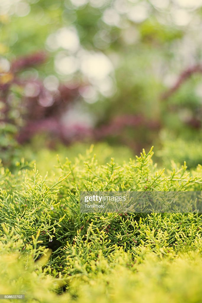 Abstract nature background : Stock Photo