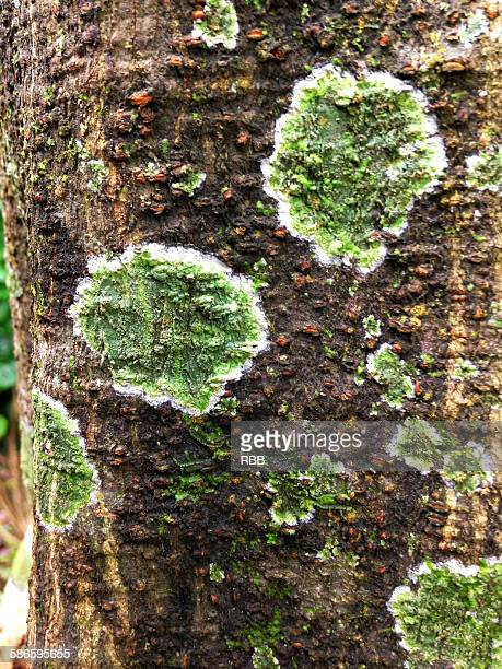 Abstract of Tree Trunk