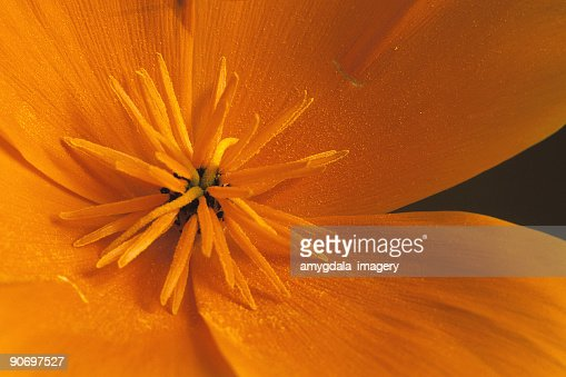 abstract orange flower extreme close up