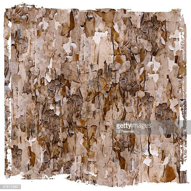 Abstract Pattern of Peeling Lead Paint