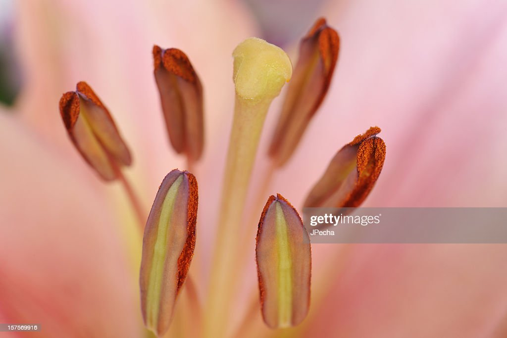 Abstract Spring Flower Macro