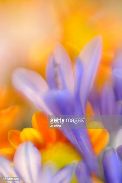 Abstract Spring Flowers Defocussed
