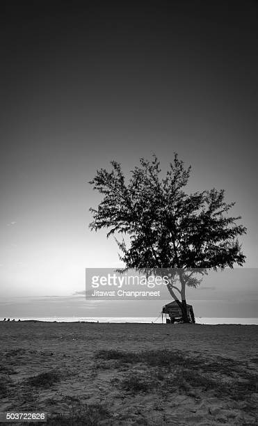 Abstract Still life tree on the beach
