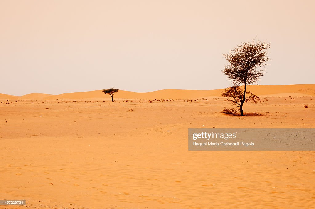 Acacia trees and dunes landscape in Sahara desert