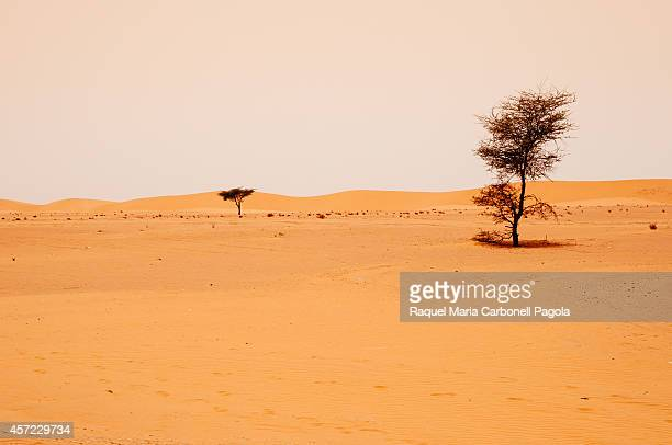 Acacia trees and dunes landscape in Sahara desert
