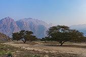 Acacia trees on the valley floor khasab, Oman. In the musandam in Oman.