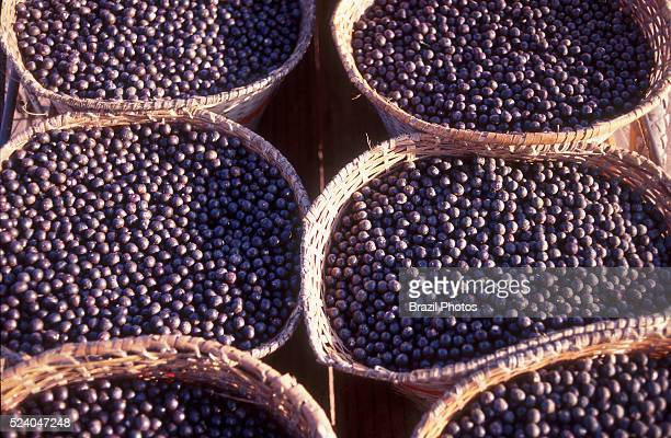Acai berry Amazon rainforest sustainable development Brazil