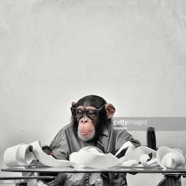 公式 Chimp ウィニー