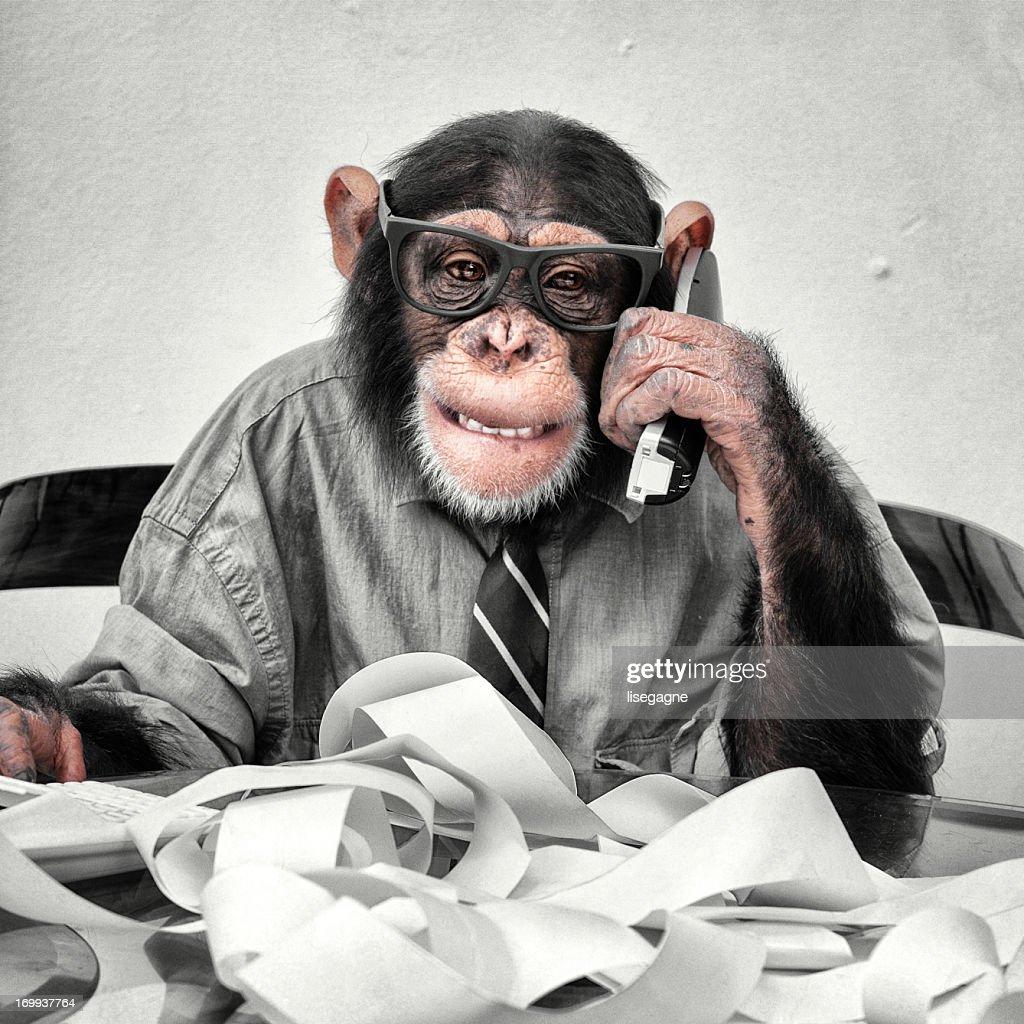 Accountant Goofy Chimp
