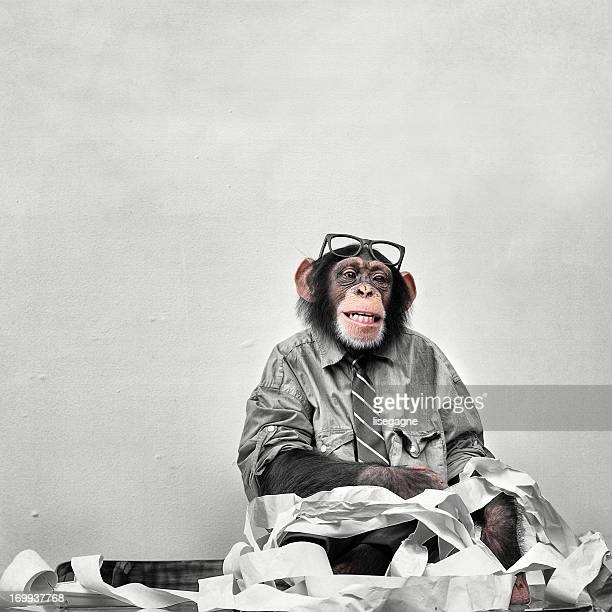 Buchhalter Goofy Chimp