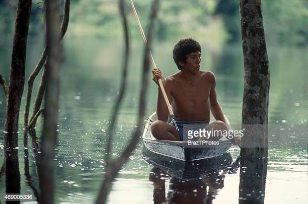 Acculturated Indian wearing shorts fishes at flooded forest of Uatumã river in a canoe using a 'zagaia' in Amazon rainforest
