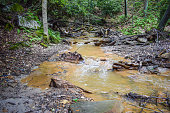 A small mountain stream flowing through the Appalachian Mountains in Pennsylvania that has been degraded by coal mining.