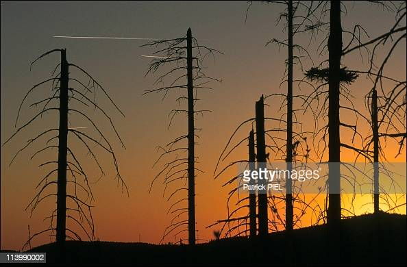 Acid rain in Germany on May 1990The former EastWest German border in the mountain area Harz