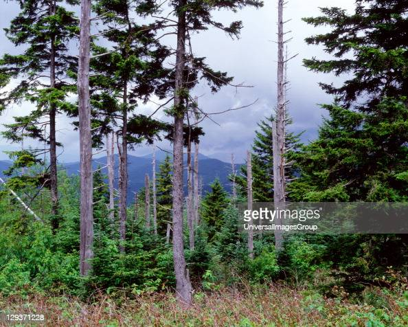 Acid rain is caused by sulphur dioxide and nitrous oxides in the air reacting with water causes trees especially conifers to drop needles and suffer...